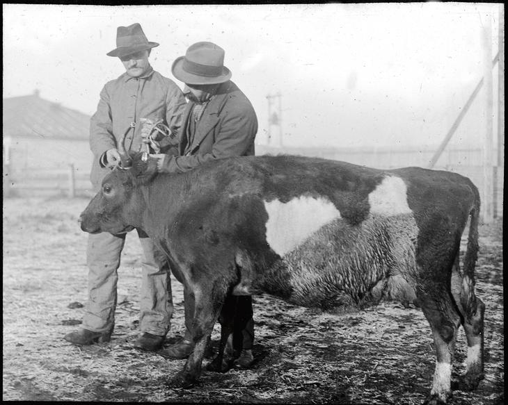 Historisk bilde fra omsetning av dyr